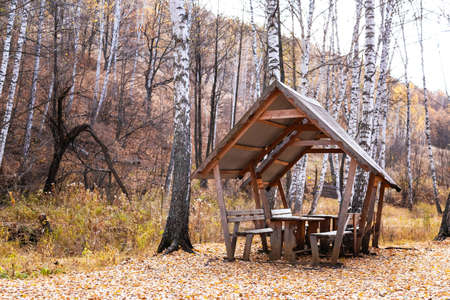 Wooden Gazebo with a Table and Benches for Relaxation and Picnic on a Weekend in Nature Outdoors in a Birch Forest in Autumn 스톡 콘텐츠