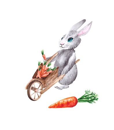 Watercolor drawing of a gray rabbit with a cart full of carrots, isolated on a white background. Drawing of a funny eared character and fresh carrots for books, stories, postcards and illustrations.