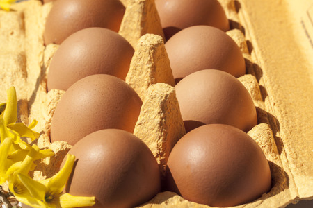 egg box: Cardboard egg box with  brown eggs Stock Photo