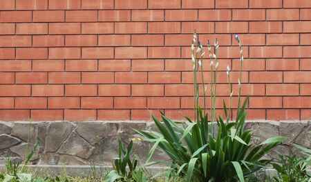 ornamental garden: Background and texture of red brick wall with blooming flowers on foreground Stock Photo