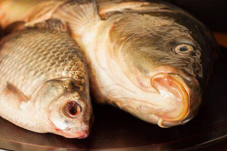 mirror carp: Mirror carp, crucian , fresh fish on a wooden board. Fishing concept. Concept proper nutrition.