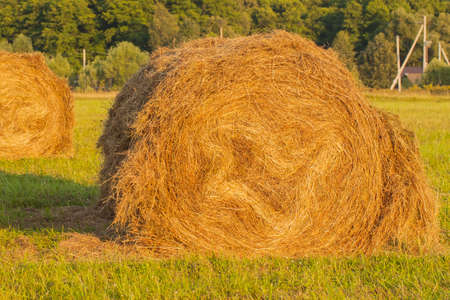 rebelling: Haystack in a field, close-up on a background of forest Stock Photo