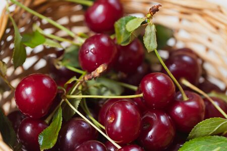 tannins: Cherry - joy for eyes and delight to mouths. Dark-red beauty with tender flesh, saturated acid taste. Delicious treat, perfectly quenches thirst in hot weather, perfect dessert for fun during the day Stock Photo