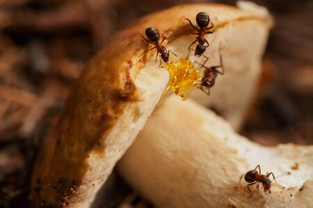 laborious: Ant societies have division of labour, communication between individuals, and ability to solve complex problems. These parallels with human societies have long been an inspiration, subject of study Stock Photo
