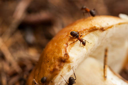 Ant societies have division of labour, communication between individuals, and ability to solve complex problems. These parallels with human societies have long been an inspiration, subject of study Stock Photo