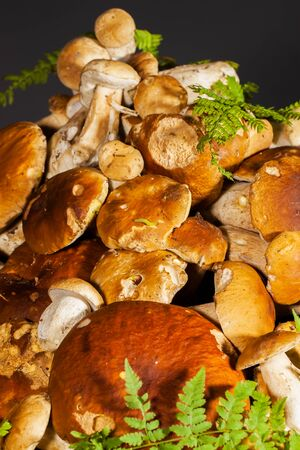 king fern: Big pile of fresh porcini mushrooms before cooking, decorated with green fern on a black background, vertical