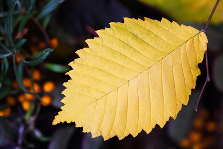 Autumn background with yellow leaf, selective focus. Place for your text, for background use.