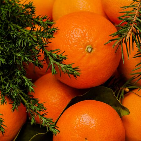 Tangerines with leaves and fir in Christmas decor . Top view. Square image