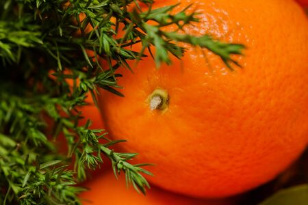 citrus reticulata: Christmas concept - one gold tangerine close shots and branch of pine tree Stock Photo