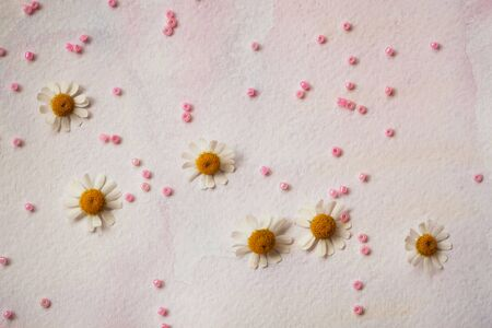 tenderness: Delicate pink background with paper texture, hand-drawn watercolor, fresh daisies. Scattered beads. Concept of love, romance, tenderness, Valentines day