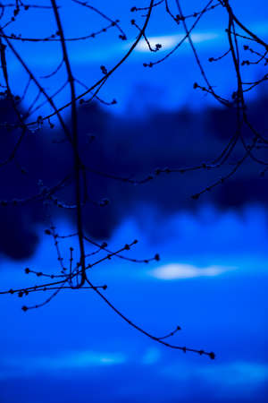 Dark silhouette of tree branches with swollen buds on the river background and reflecting the forest there. Early spring, blue twilight on the river. Vertical