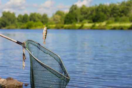 freshwater fish: Trophy fishing. Small fish on fishing line, an old fish landing net, sunny landscape with water. Concepts fortune, success, active rest, irony, countryside relaks Stock Photo