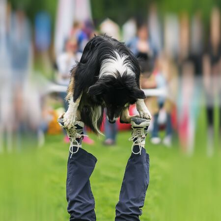 Dexterous performance of capable dog with owner. Almost circus acrobatic stunt. Concept of friendship between man and dog. Happiness in motion, sports training, show
