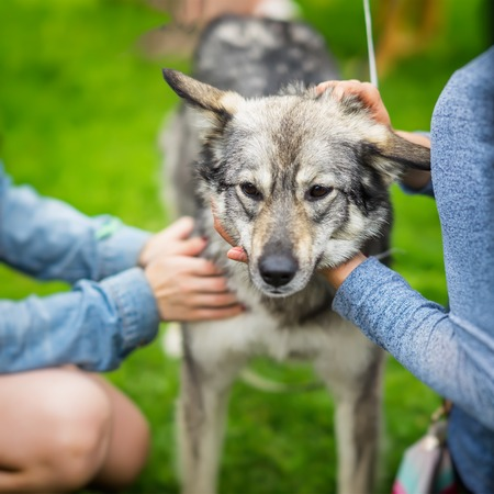 Hands of Girls regret and caress dog from shelter with sad understands eyes. Dog hopes to have owner. Loneliness, uselessness, social problem, homeless animals, adoption Stock Photo
