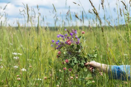 clovers: Hand of Girl with bouquet of beautiful wildflowers on background of summer meadow. Concept of seasons, environmental and ecology, nature, natural background