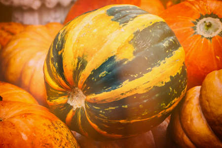 berry: Close-up of rire green pumpkin, vintage colours. Rustic fall background