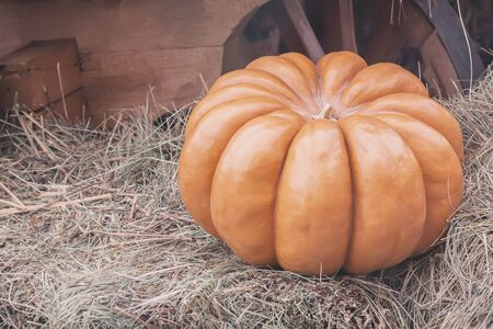 berry: Ripe large ribbed pumpkin on straw, vintage colours. Rustic fall background with copy space Stock Photo