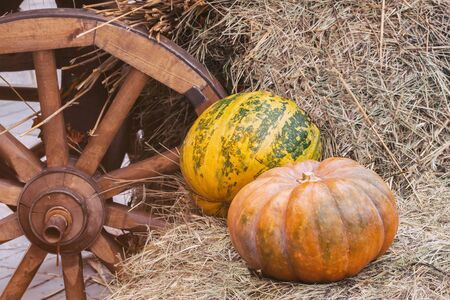 Rustic vintage autumn, fall background with ripe large ribbed pumpkins on straw near wooden wheel of cart, vintage halftones