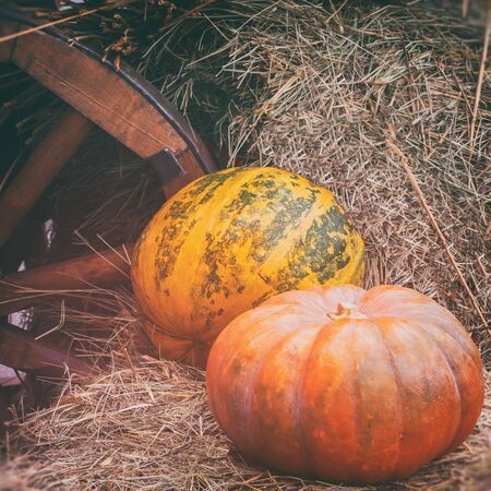 Close-up of ripe large ribbed pumpkins on straw near wooden wheel of cart, vintage halftones. Rustic vintage autumn, fall background