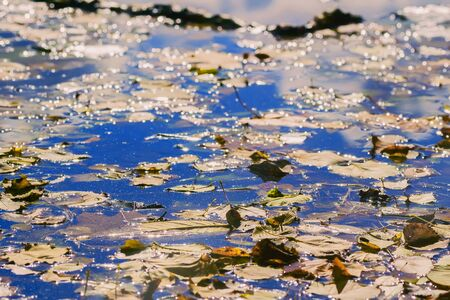 silvery: Colorful autumn leaves on cold blue water with silvery glow Stock Photo
