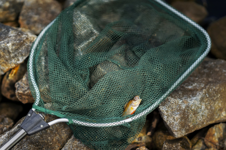Bright perch, small fish in large fisher net. Concept luck, fortune, case, finance, investment, success, active rest, hobby, countryside relaks. Copy Space