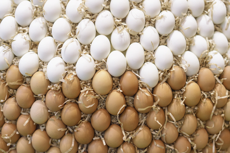 Many organic fresh white and brown eggs. Concept of poultry farming, agriculture and healthy food. Rural background and texture Standard-Bild - 113081997