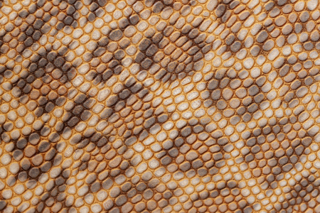 Embossed genuine leather, pattern of leopard close-up, texture and natural background, fashion trend of jungle