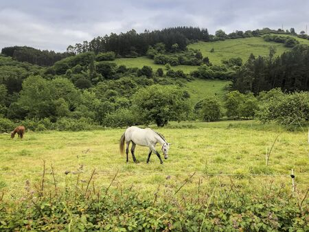 White horse on the picturesque green pasture. Country summer landscape Imagens