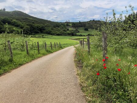 Green hills, empty country road and and blooming red poppies. Summer landscape