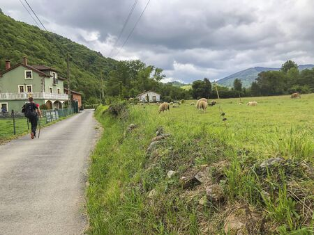 Road with a traveler near picturesque green pasture with sheep, green hills. Countryside, summer natural landscape in summer Imagens