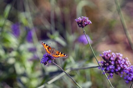 Bright butterfly and wild flowers, meadow in summer, sunny day. Picturesque colorful natural background Imagens