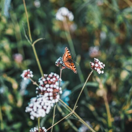Bright purple flowers flowers and a butterfly. Bright colors of summer, meadow in sunny day. Picturesque colorful background Imagens
