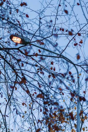 Autumn branches with falling yellow leaves and a metal lantern against the blue sky