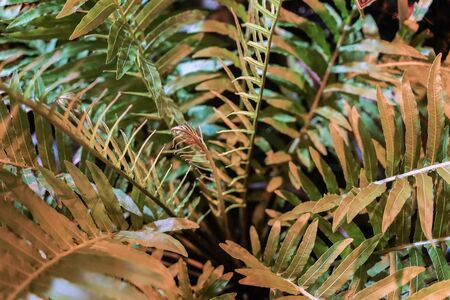 Young tropical branches of palm close-up in green orange colors, natural texture. Modern exotic botanical background Stock Photo