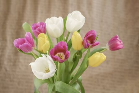 Tulips flowers close-up on vintage background. Concept of spring, holidays and gifts Imagens