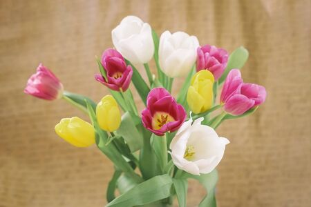 Bouquet of colorful tulips, bright flowers close-up. Concept of spring holidays and gifts