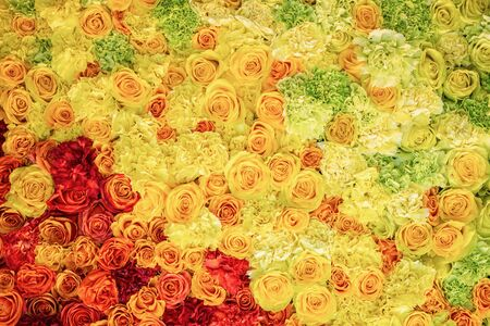 Bright colorful pattern of yellow and red roses, fresh flower texture background, top view, floral abstract wallpaper for design Imagens