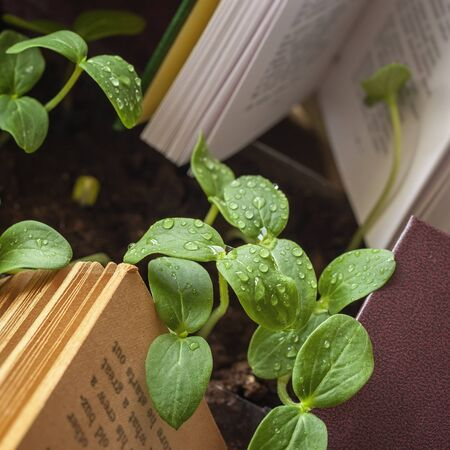Green sprouts with drops of dew, rain among open books. Concept of knowledge, cognition, ecology Imagens