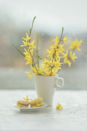 Abstract spring blurred background, spring yellow flowers, young branches in porcelain cup and french macarons on the windowsill