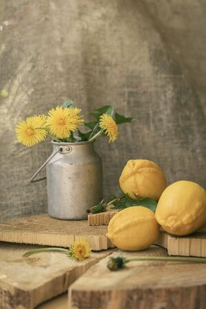 Yellow dandelions in aluminum can and three lemons, natural wooden vertical background, springtime, vintage still life Imagens