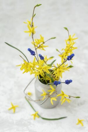 Bouquet of yellow flowers of Forsythia in old vintage aluminium can fallen petals, top view, selective focus. Rustic light background Imagens