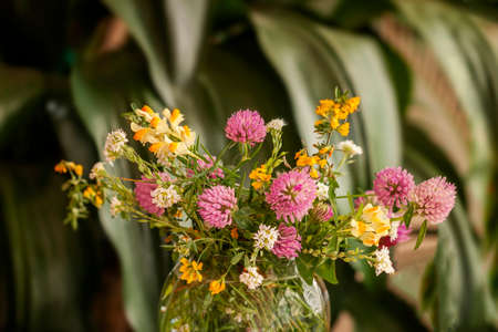 Bouquet of fresh wild flowers in glass vase on natural green background of plants.