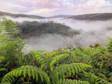 Scenic foggy morning among green hills in summer. Picturesque natural landscape. Fern in the foreground