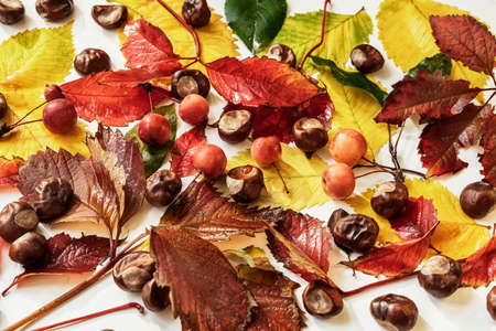 Autumn background with bright colorful fall leaf, chestnuts, berries, flat lay, top view.