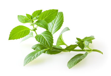 Fresh mint leaves isolated on white background 写真素材