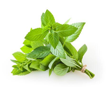 Bunch of mint isolated on white background Zdjęcie Seryjne