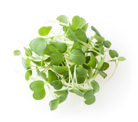 Heap of micro greens arugula sprouts isolated on white background