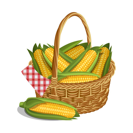 Yellow corn in basket, isolated on white. Vector illustration Ilustração