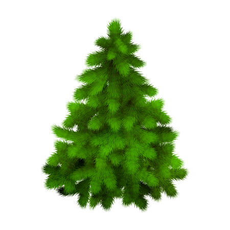evergreen tree: Christmas tree, realistic vector illustration Illustration