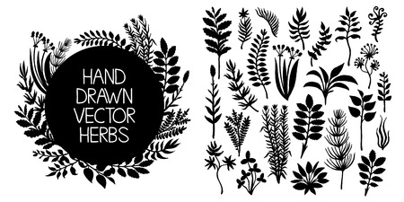 herb medicine: Hand drawn set of herbs and plants. Vector design elements
